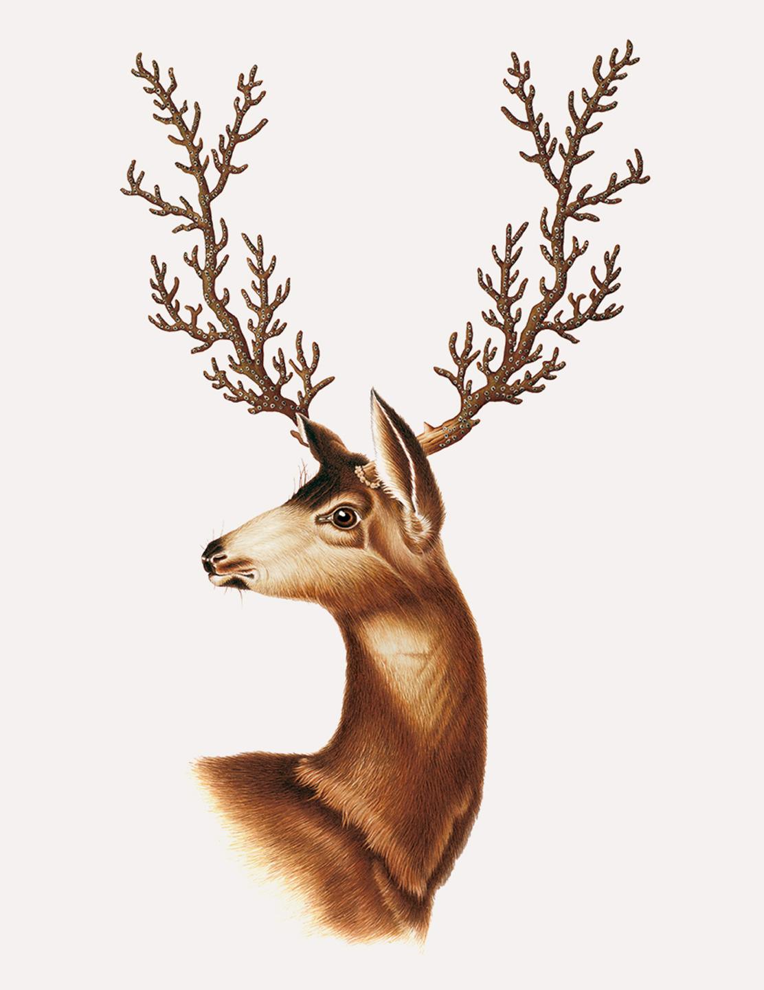 deer-lg