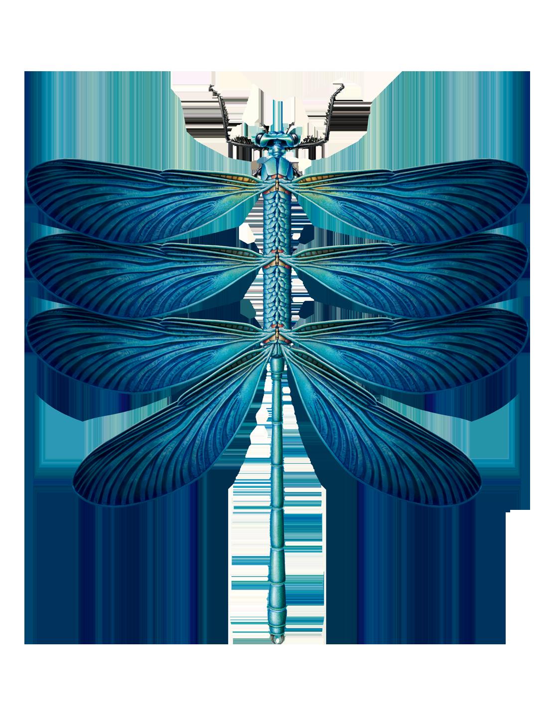 dragonfly-lg