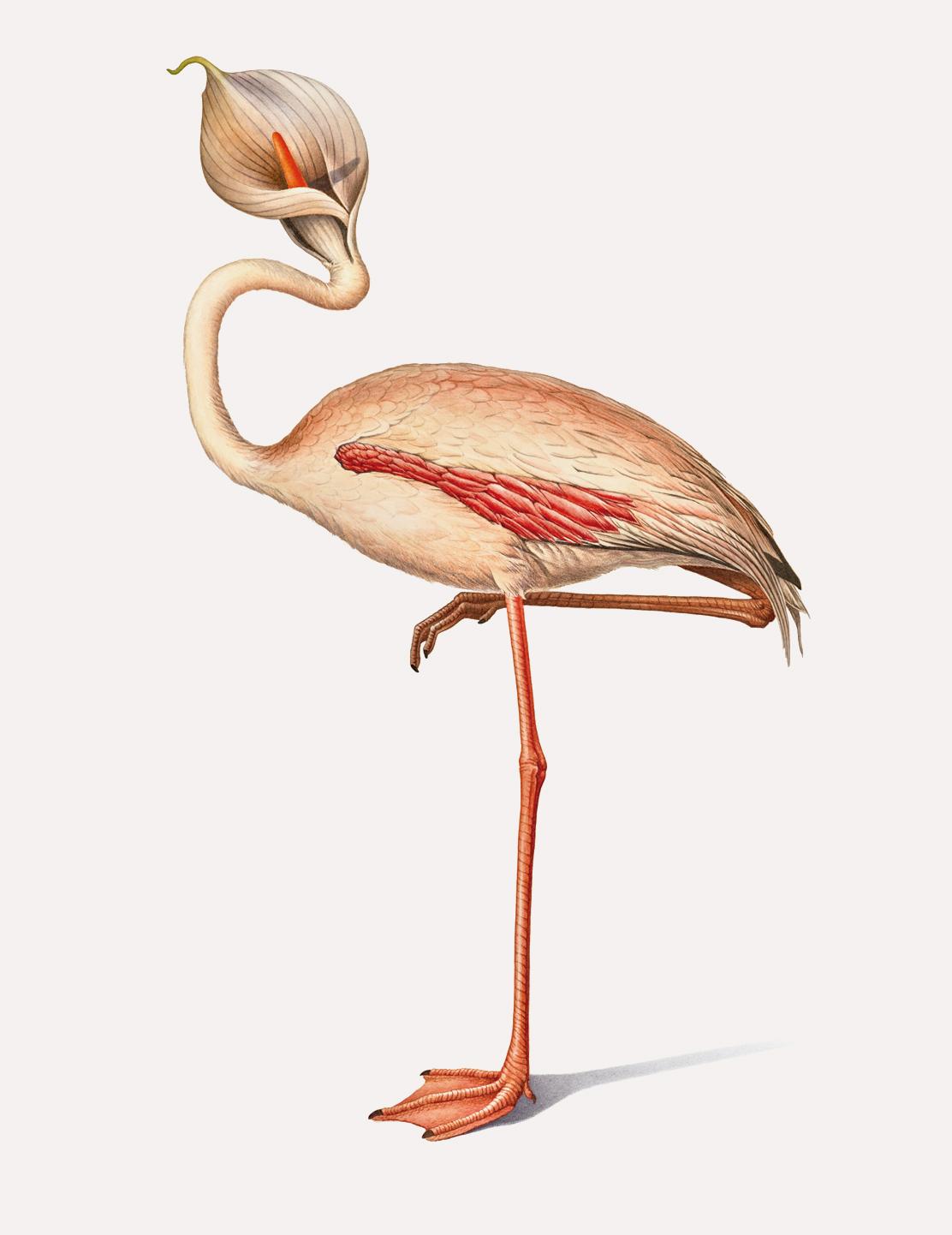 flamingo-lg