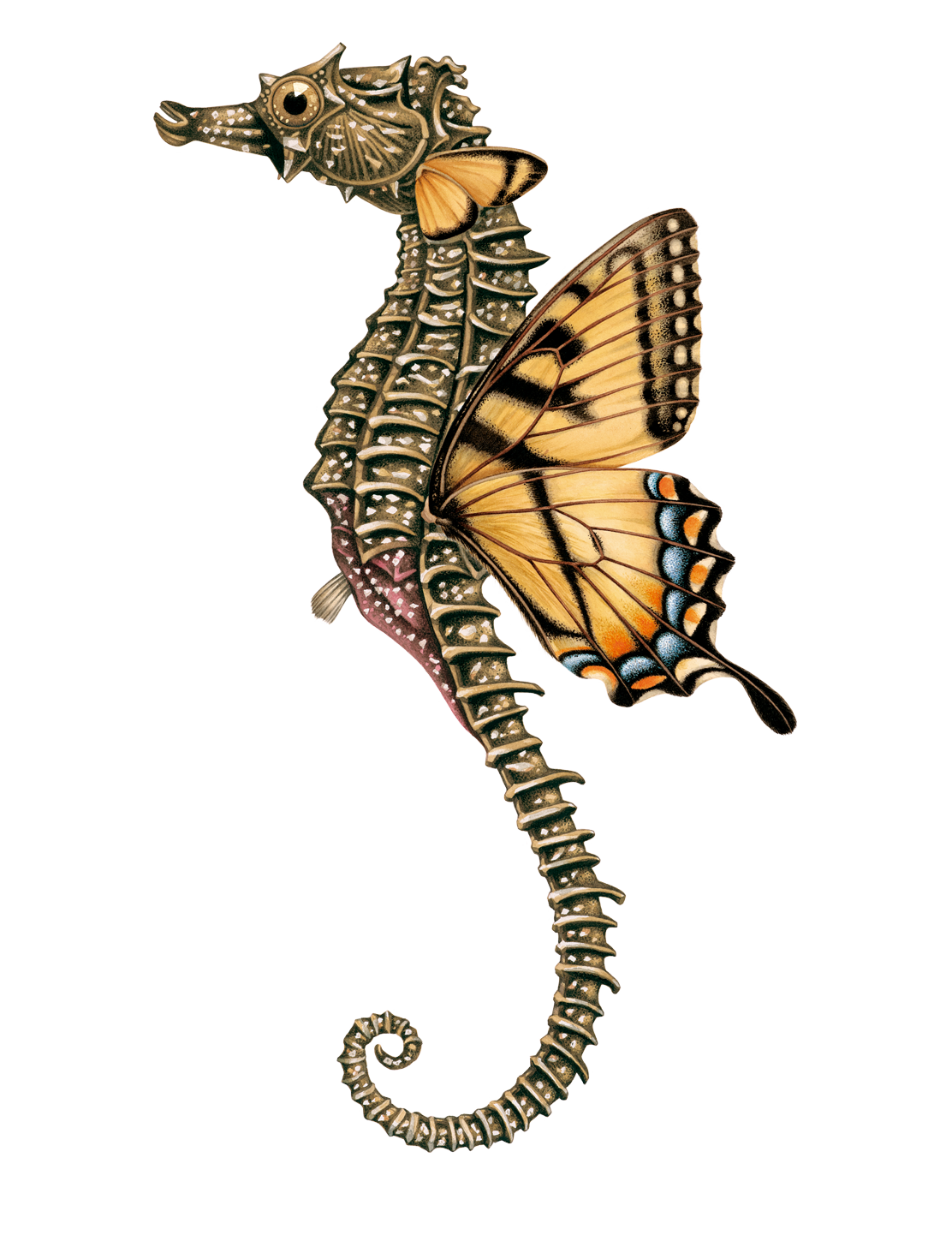 seahorse-lg
