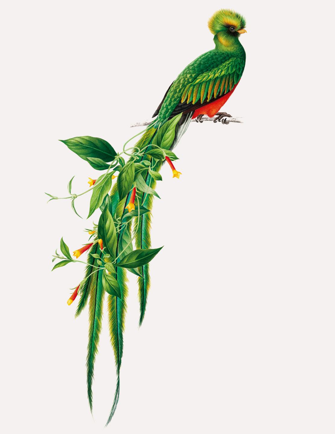 bird-lg