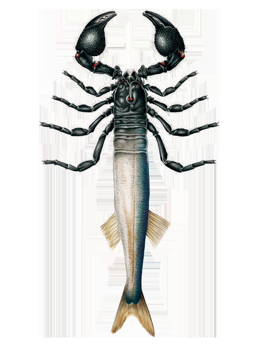 fish-lg