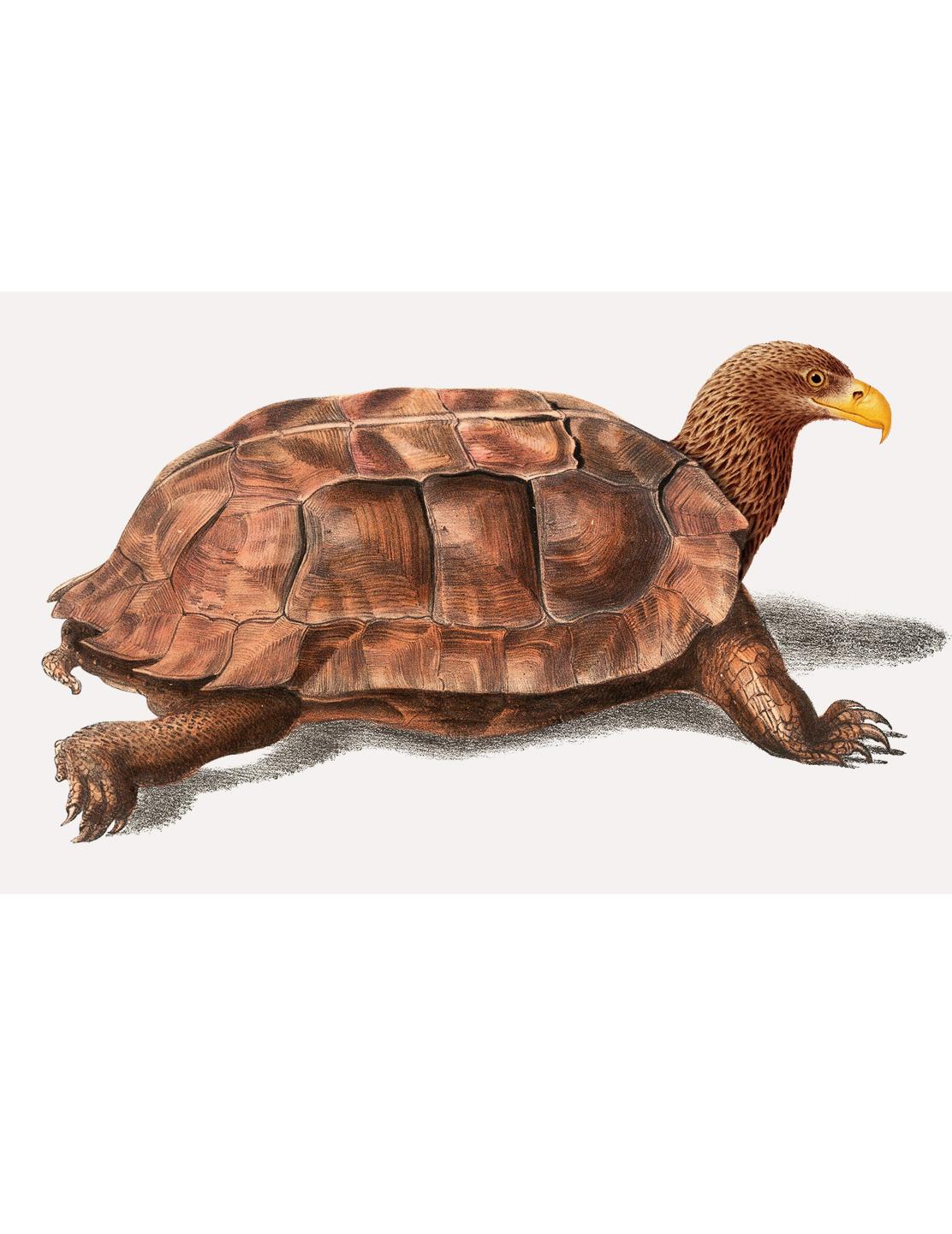 turtle-lg