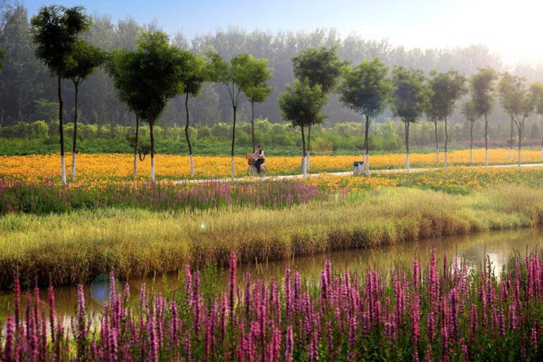 turenscape-sanlihe-river-ecological-corridor-08